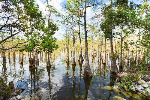 The Florida Springshed Initiative: Protecting Our Waters